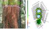 Các giải pháp công nghệ hỗ trợ kiểm tra trình trạng sức khỏe cây xanh